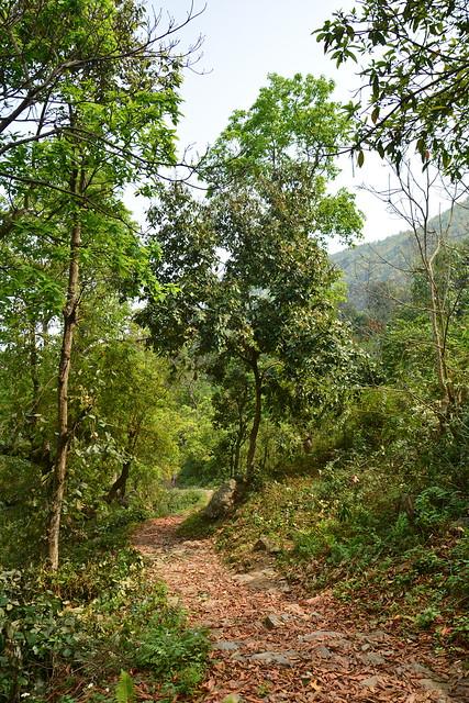 Nepal - Bandipur - Way To Bimalnagar Siddha Cave - 4