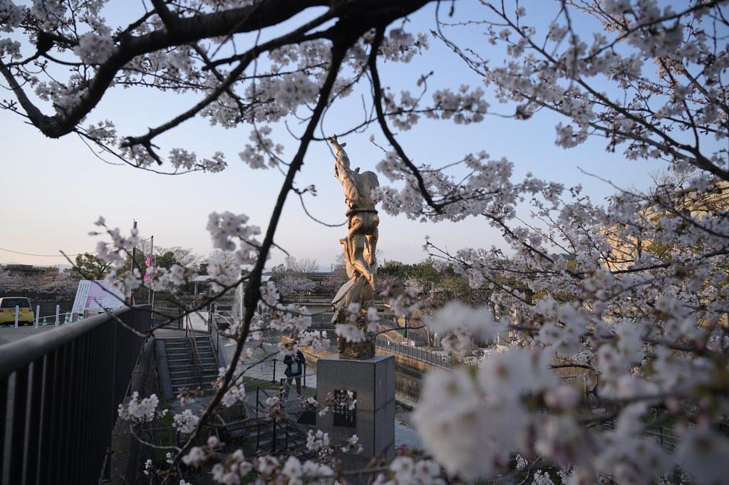 京都岡崎の2021年桜 2