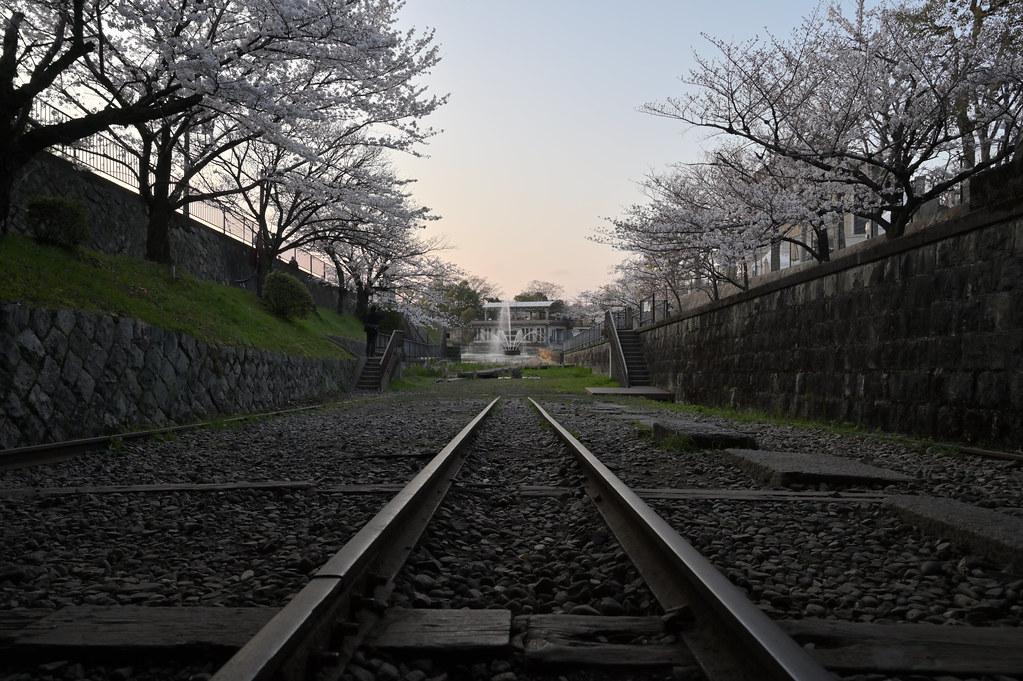 京都岡崎の2021年桜 13