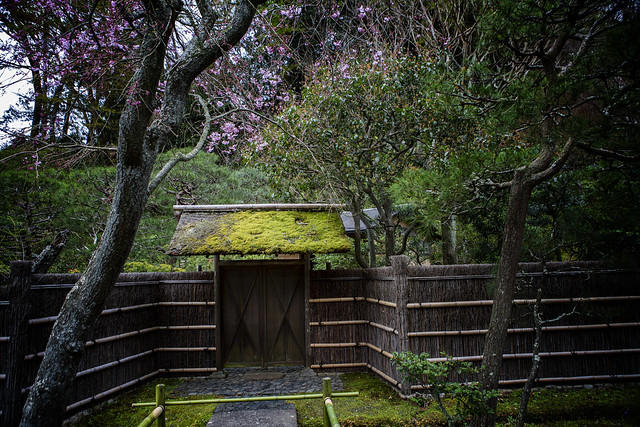 A Classic Japanese Scene In Tokei-ji Temple, Kamakura