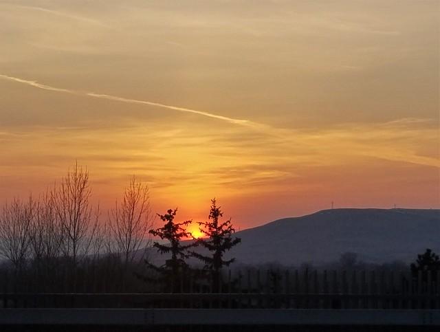 Trees hugging sunset