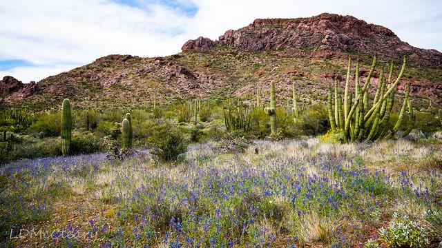 Desert in Springtime