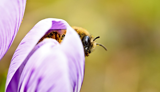 Fascination in the world of bees