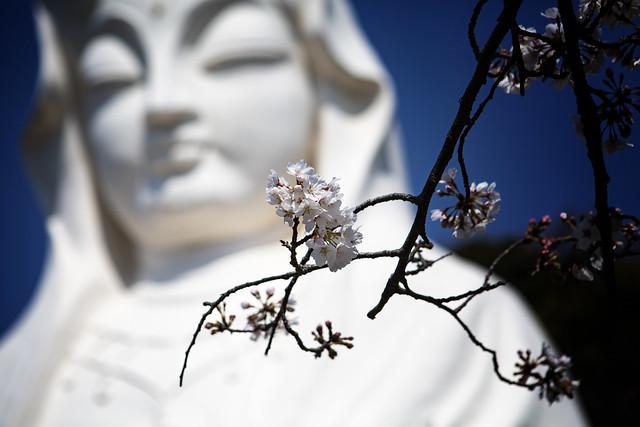 Blossom & The Great Kannon Bodhisattva Statue Of Ofuna
