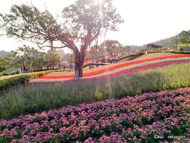 Park blossoms at「 北投社三層崎公園」, Taipei, Taiwan, SJKen, Feb 6, 2021.