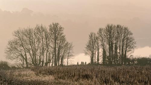 morningmist winter lockdownwalk churchtownfarmnaturereserve saltash secornwall riverlynher silhouettes trees fields