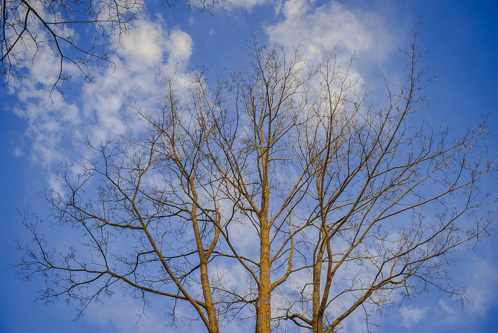 весеннее небо особенное  12:38:55 DSC_1030
