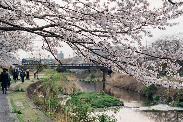 Sakura_20210327 (10)