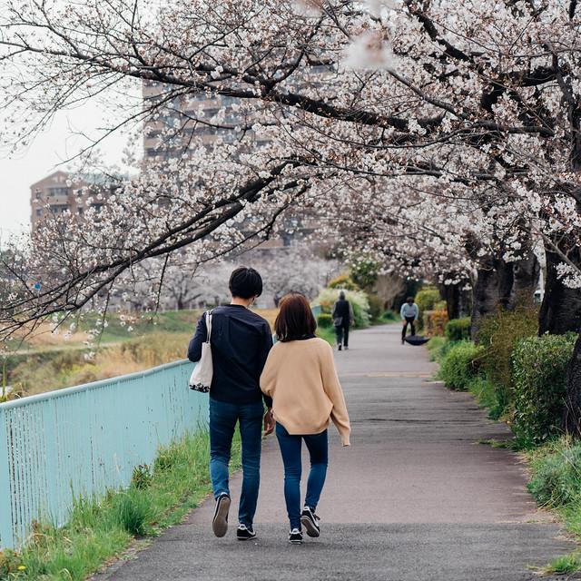 Sakura_20210327 (7)