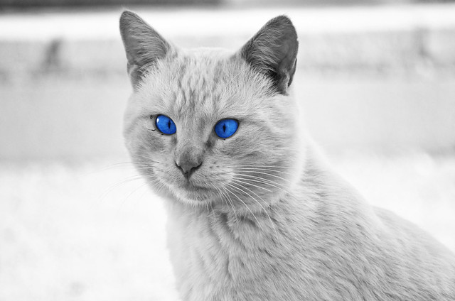 Sweet cat 2