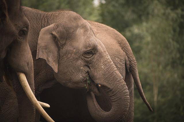 Edgar Allan the Elephant.