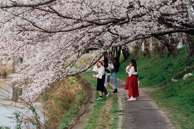Sakura_20210327 (11)