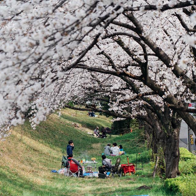 Sakura_20210327 (4)