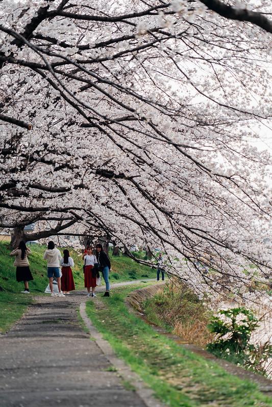 Sakura_20210327 (9)