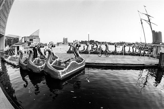 Sea monsters?
