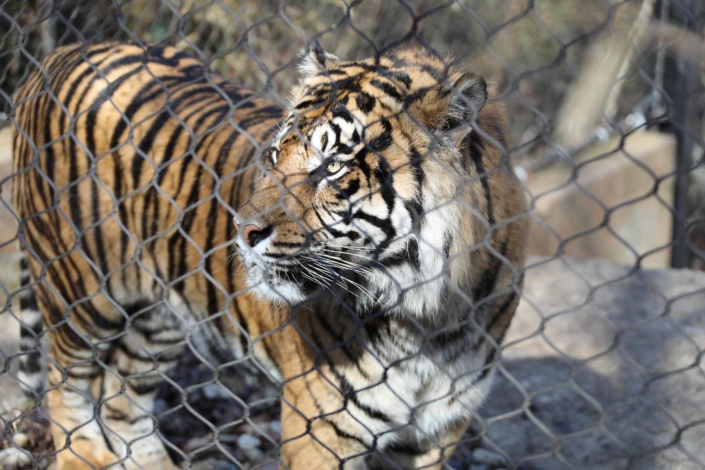Kansas City Zoo March 2021