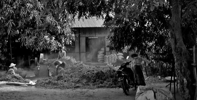 MYANMAR , Burma - Old-Bagan, mit der Pferdekutsche durch die ländlichen Vororte, zu den historischen Stätten, 78247/13510