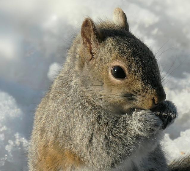 Squirrel (Explored)