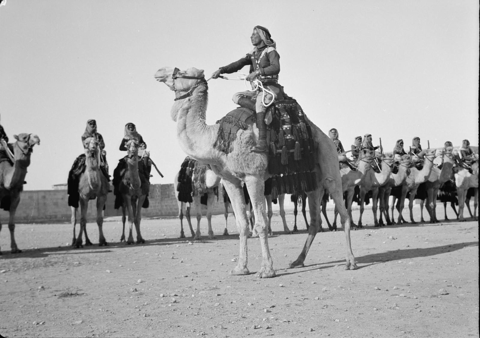 17. Сержант верблюжьего корпуса