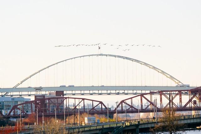 Bridge, bridge, bridge, goose