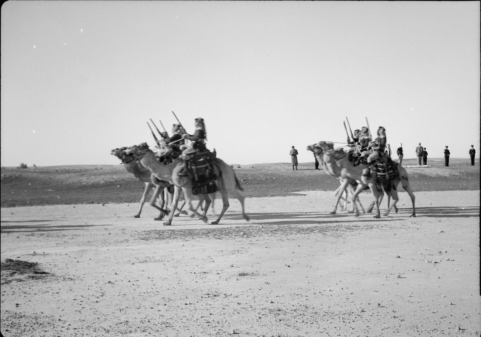 13. Верблюды пробегают мимо смотровой площадки.
