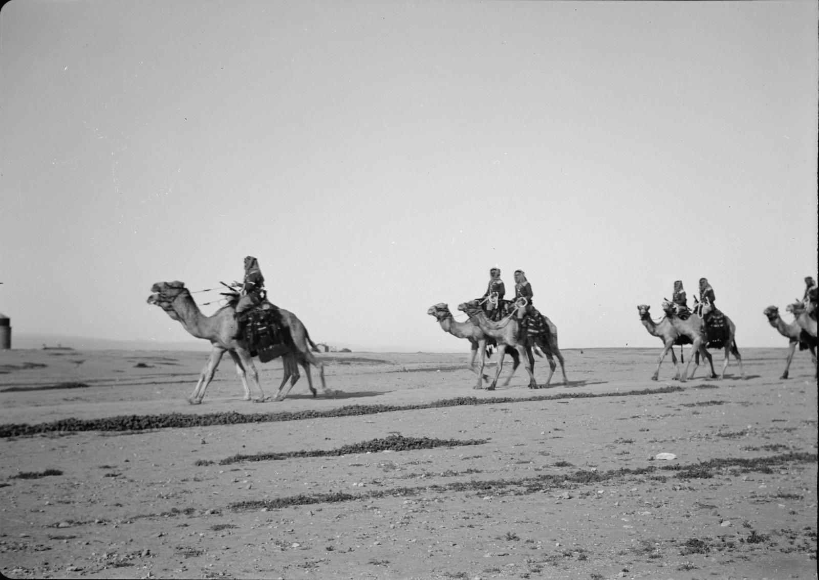 15. Верблюды маневрируют на поле