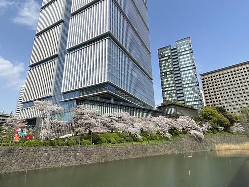 東京ガーデンテラス紀尾井町 桜 2021/3/26