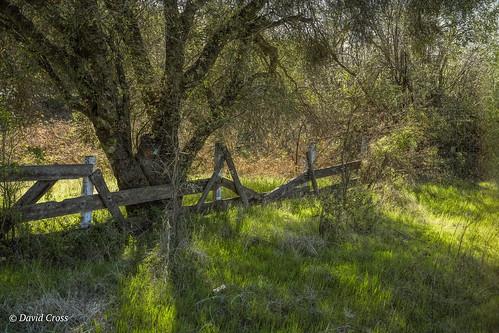 california spring pleasantvalleyroad sierranevadafoothills oakwoodland lightroom6 oaktree topazstudio canon5dmarkiii canonef24105mmf4lisusm nevadacounty landscape