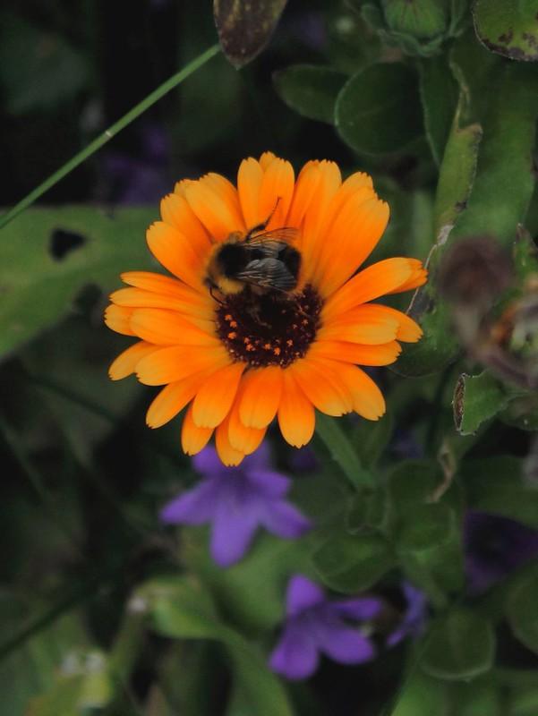 Summer Flower & Bee 2020 (1)