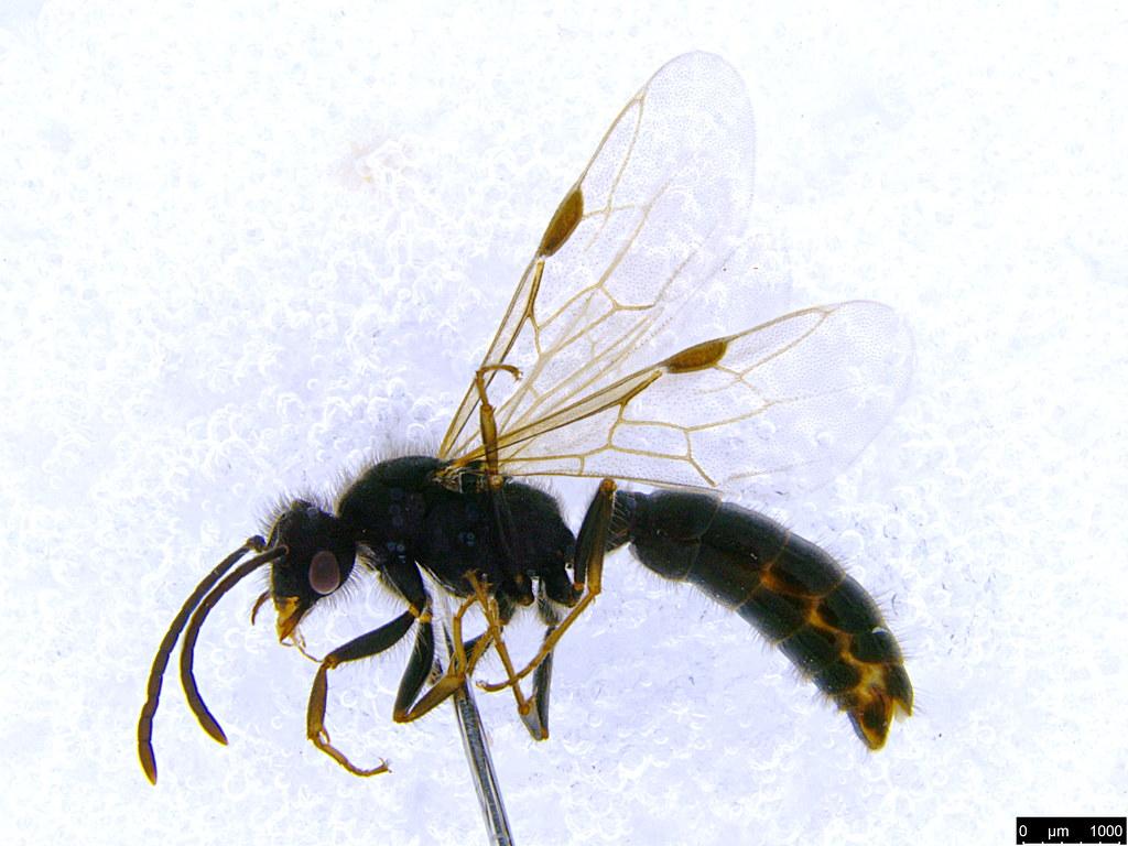 21a - Formicidae sp.