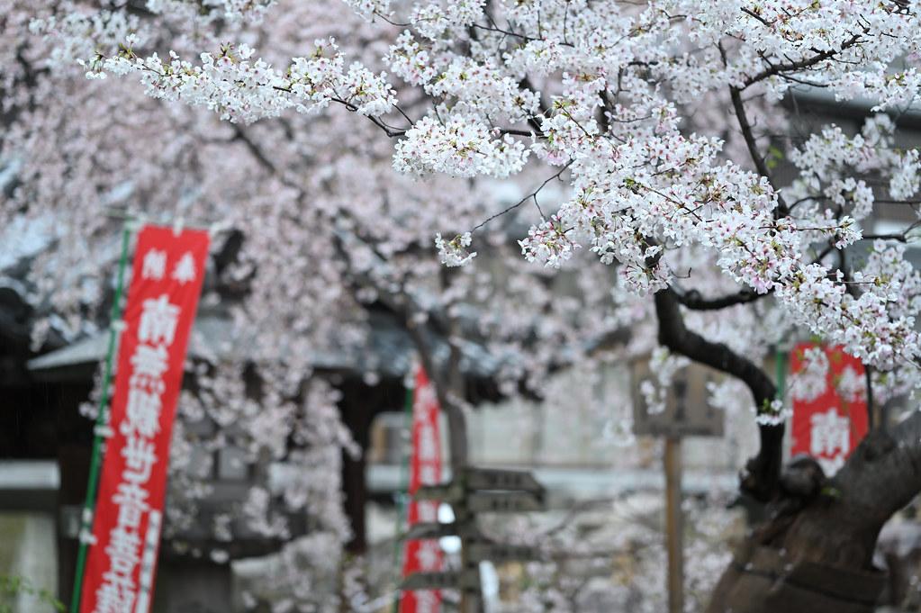 桜咲く雨の六角堂 2
