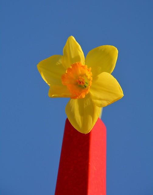 Colori di primavera - Spring colors