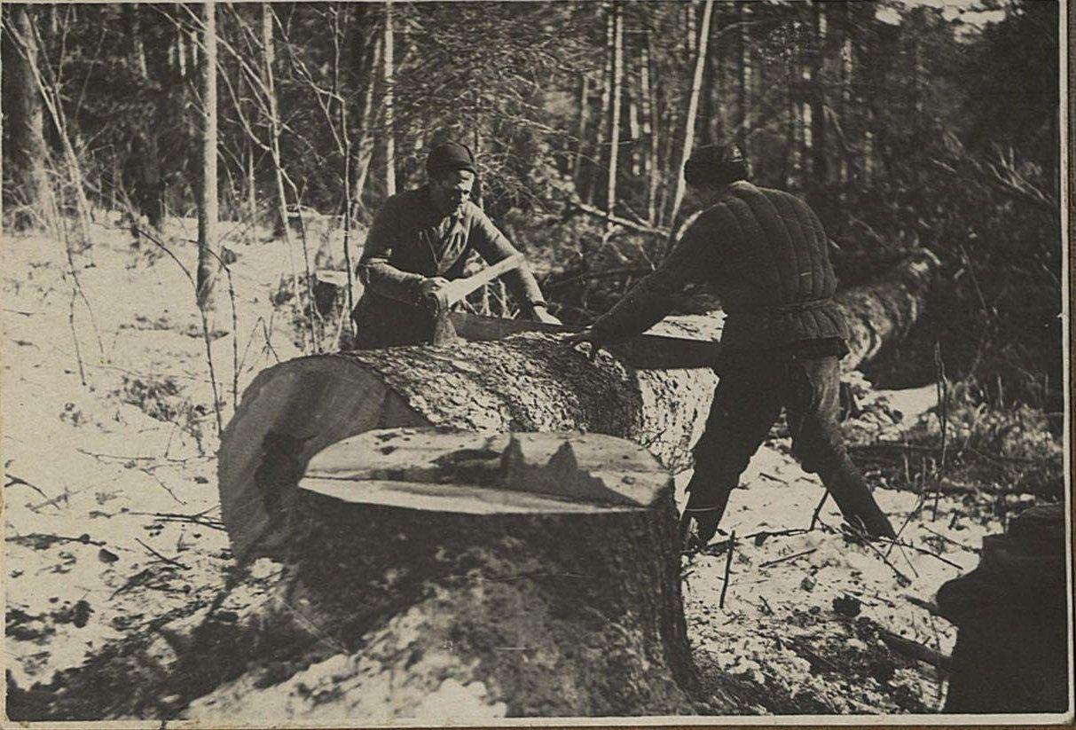 07. Откряжёвка леса