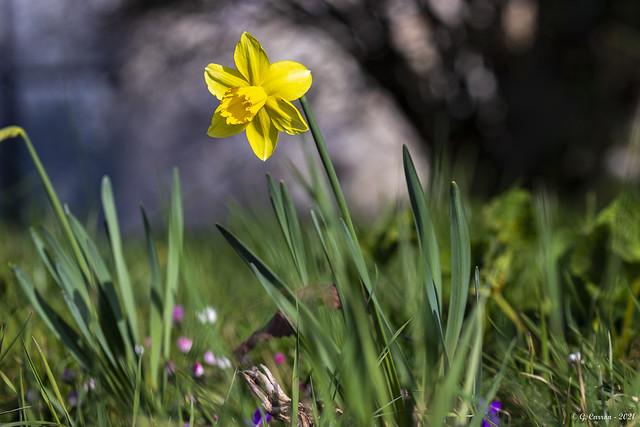 Couleurs printanières  * Spring colors  (Savoie 03/2021)
