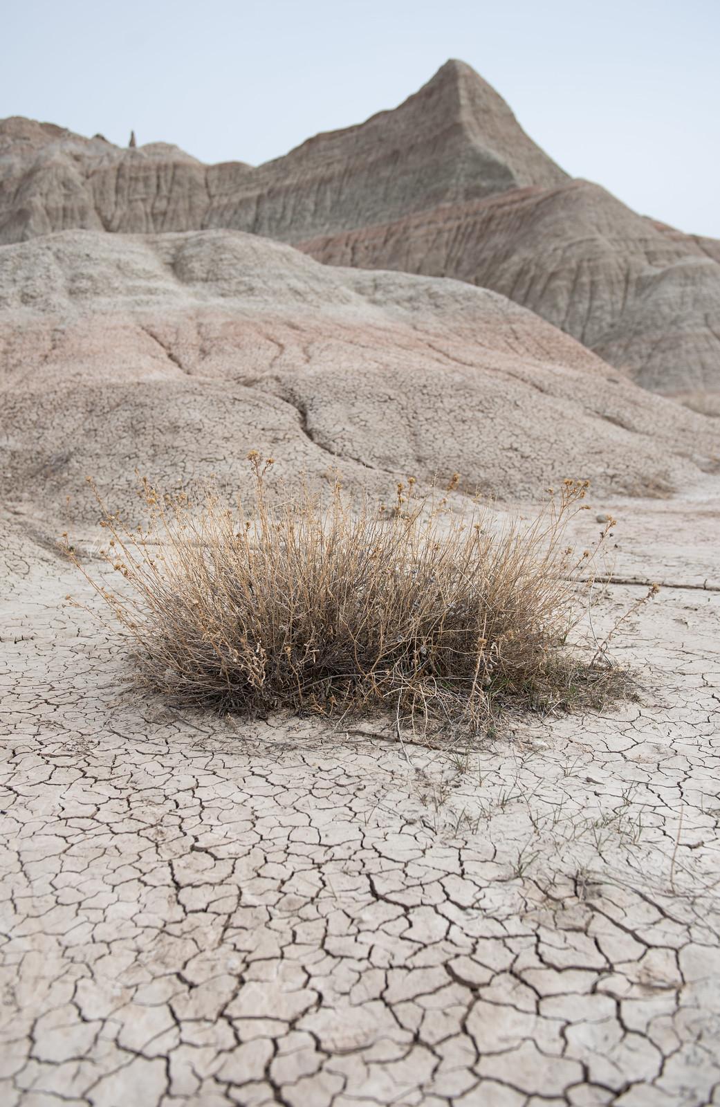 Badlands Bush