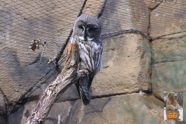 Besuch Zoo Berlin 27.03.21068