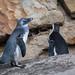 "<p><a href=""https://www.flickr.com/people/96231272@N02/"">tbird1972</a> posted a photo:</p>  <p><a href=""https://www.flickr.com/photos/96231272@N02/51078497703/"" title=""20210327_zoo-024""><img src=""https://live.staticflickr.com/65535/51078497703_162a1b0e39_m.jpg"" width=""240"" height=""180"" alt=""20210327_zoo-024"" /></a></p>"