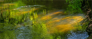 Sunlit waters