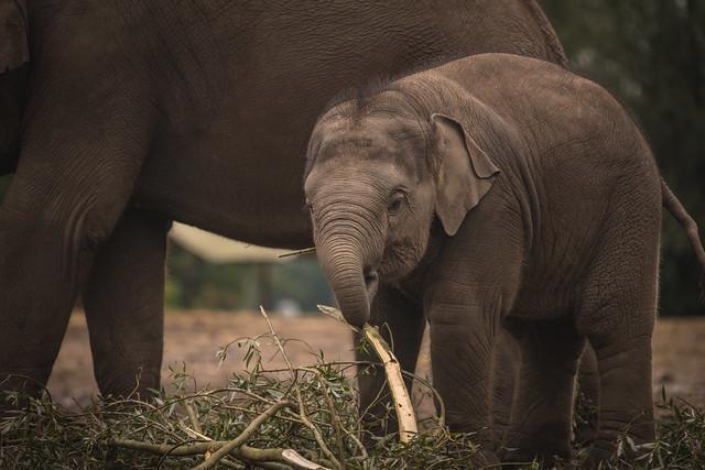 Elly the Elephant.