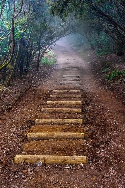 Steps / Escalones
