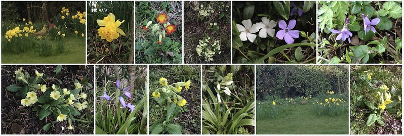 Montage: Spring Flowers
