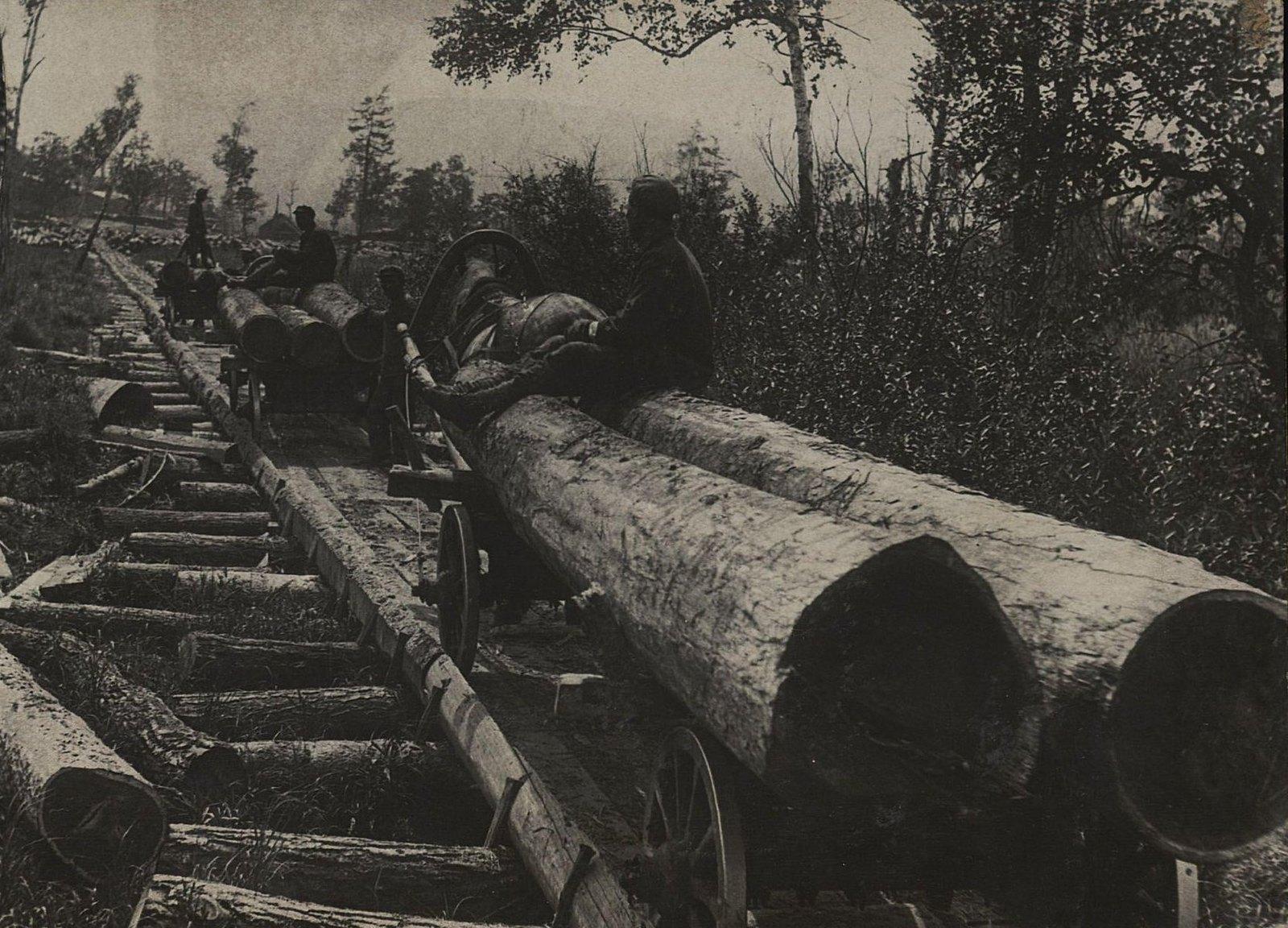 05. Вывозка леса по лежневой дороге