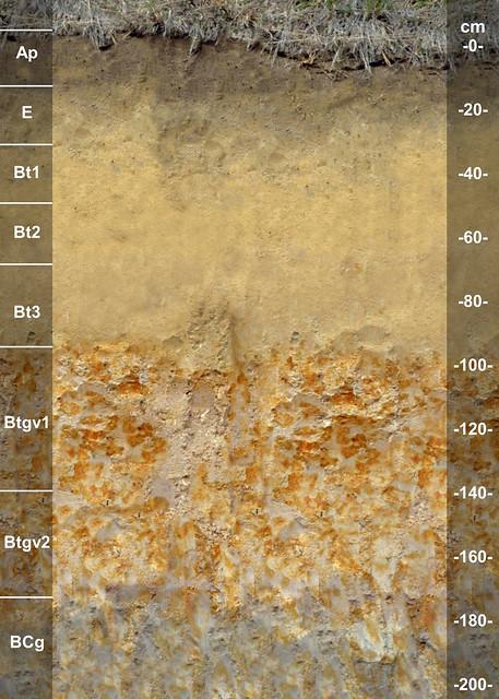 Clarendon soil series