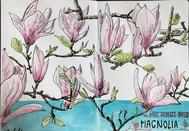 Spring is back : Magnolias
