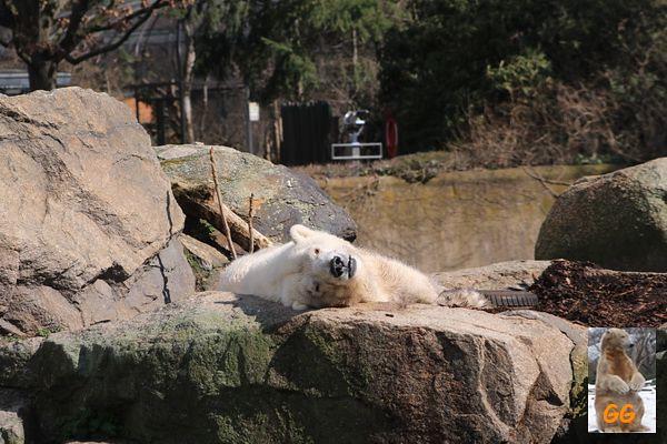 Besuch Zoo Berlin 27.03.21062
