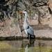 "<p><a href=""https://www.flickr.com/people/96231272@N02/"">tbird1972</a> posted a photo:</p>  <p><a href=""https://www.flickr.com/photos/96231272@N02/51079292882/"" title=""20210327_zoo-023""><img src=""https://live.staticflickr.com/65535/51079292882_fd7b3c7ccd_m.jpg"" width=""175"" height=""240"" alt=""20210327_zoo-023"" /></a></p>"