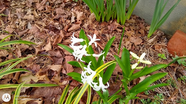 March blooms
