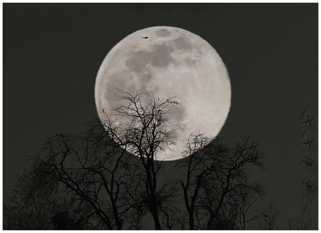 Luna del gusano.