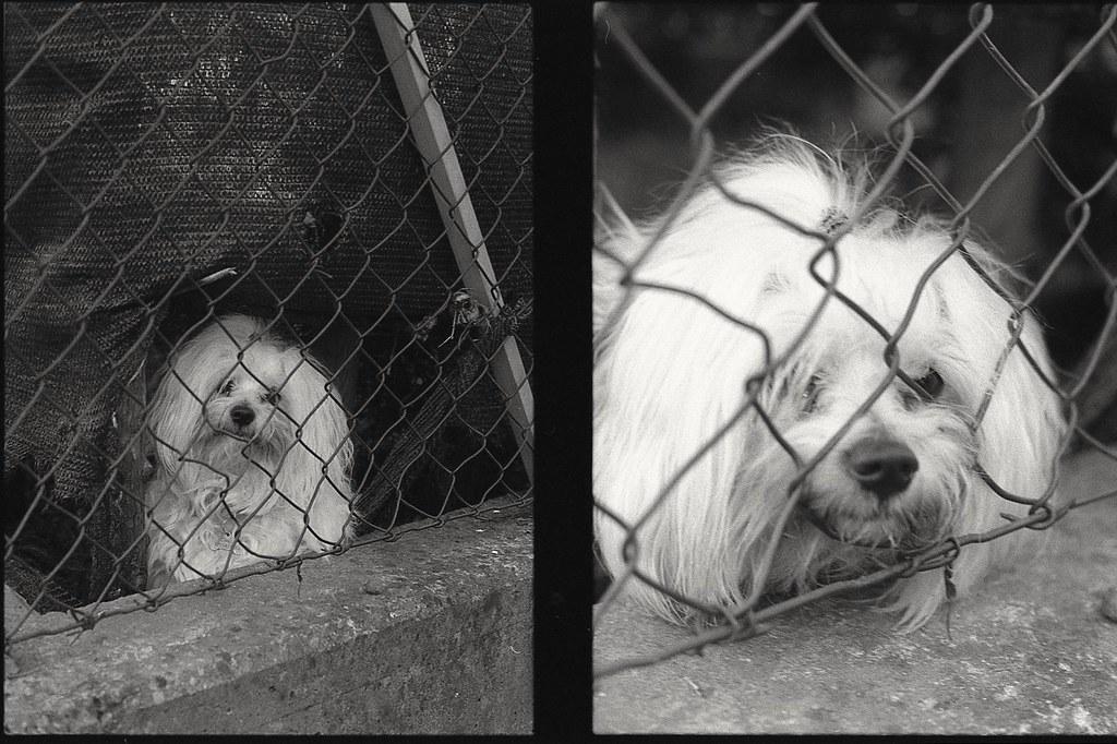 Canini in zona rossa