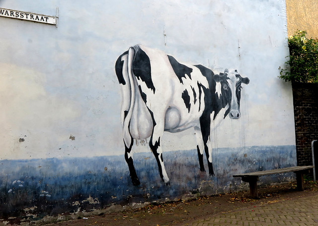 [street-cow]